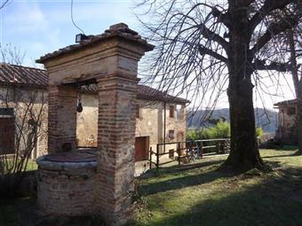 Azienda agricola, Siena