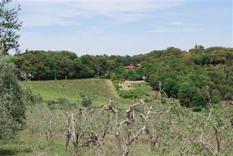 Azienda agricola, Gambassi Terme, in ottime condizioni