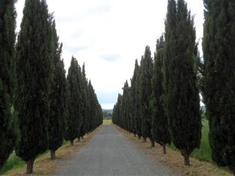 Colonica, Castelfiorentino