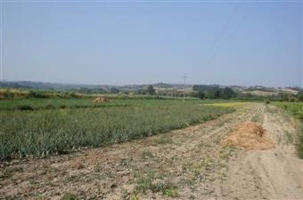 Terreni agricoliFirenze - Terreno agricolo, Castelfiorentino
