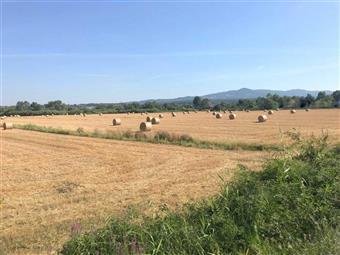 Terreno agricolo in Strada Provinciale Del Paratino, Cecina