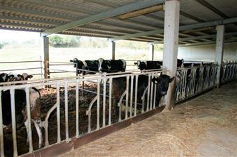 Azienda agricola in Apparita, Montiano, Magliano In Toscana