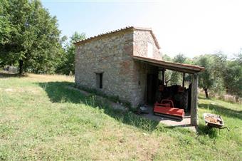Azienda agricola, Torniella, Roccastrada