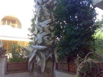 Villa a schiera, Mugnano Di Napoli, abitabile