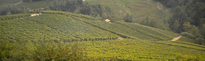 in vendita Azienda agricola, Vicinanze Alba, Alba - Rif ...
